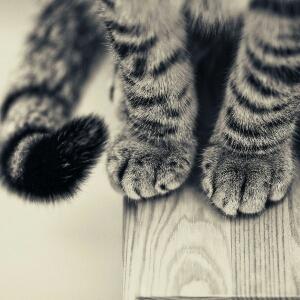 猫脚上的灰团子