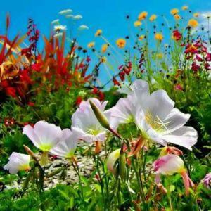 盛开的花儿