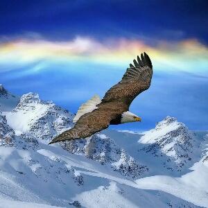 我要像雄鹰