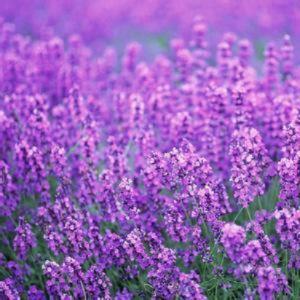 紫色羽翼的天空