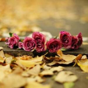 红叶秋霜落