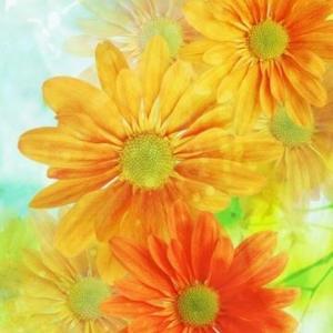 一只橙花花环