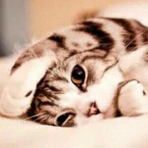 猫猫(]^ω^[)