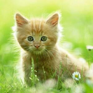 妮妮猫宝宝