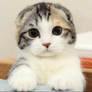 泡牛奶的猫