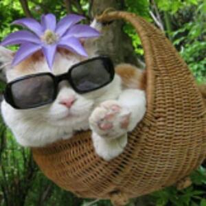 优雅的猫咪
