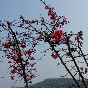 春流水冬逝花